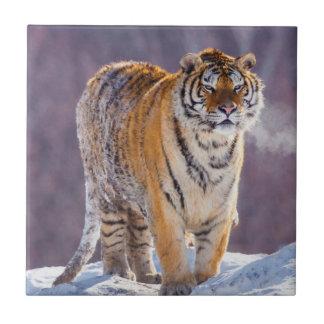 Sibirischer Tiger im Schnee, China Keramikfliese