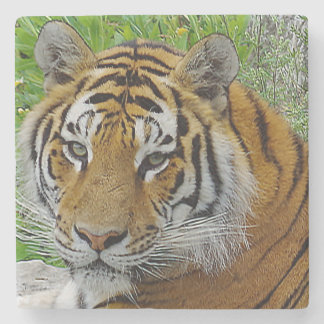 Sibirischer Tiger-Nahaufnahme-Foto des Gesichtes Steinuntersetzer