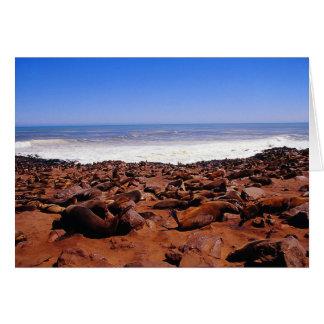 Siegel-Kolonie in Namibia Karte