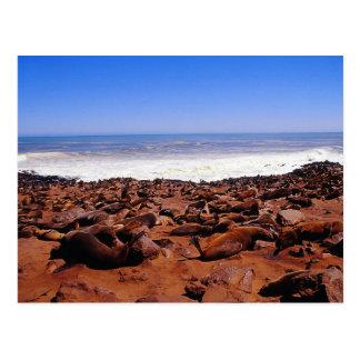 Siegel-Kolonie in Namibia Postkarte