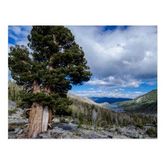 Sierra Wacholderbusch und Immergrün-Bäume 2 Postkarte