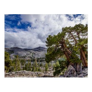 Sierra Wacholderbusch und Immergrün-Bäume Postkarte