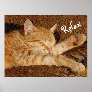 Siesta - entspannende Katze Poster