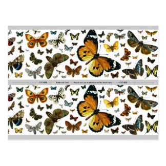 Signet ancien d'image de papillons colorés carte postale