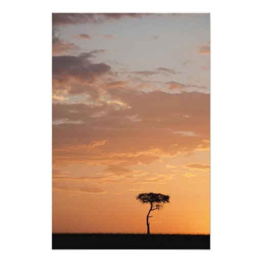 Silhouette des Baums auf Ebene, Masai Mara Fotos