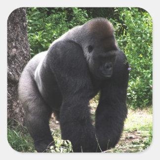 Silverback-männlicher Gorilla gehendes Quadratischer Aufkleber