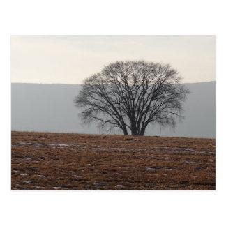 Single-Baum auf dem Gebiet Postkarte