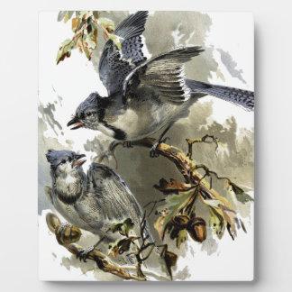 Singvögel Fotoplatte