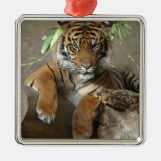 Sitzen hübsch silbernes ornament