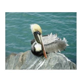 Sitzender Pelikan Acryldruck