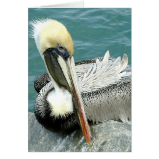 Sitzender Pelikan Karte
