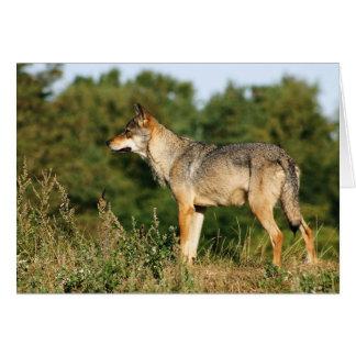 Skandinavischer grauer Wolf Notecard Karte