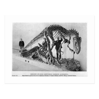 Skeleton Kunstpostkarte des Allosaurus Postkarte