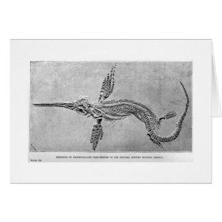 Skelett der Ichthyosauruskunstkarte Karte