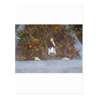 Skelett in den Ringelblumen Postkarte
