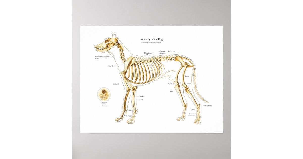 Gemütlich Hund Anatomie Poster Ideen - Anatomie Ideen - finotti.info