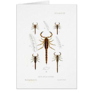 Skorpione Karte
