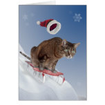 Sledding Katzen-Weihnachtskarte Karten