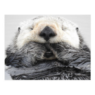 Sleeping Sea Otter Postkarte