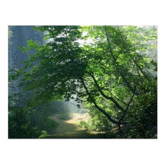 Smokey Weg-Hinterwaldholz Postkarte