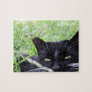 Smokings-Katze im Gras -