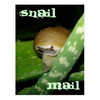 Snail mailpostkarte postkarte