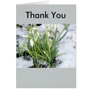 Snowdrops im Schnee danken Ihnen zu kardieren Karte