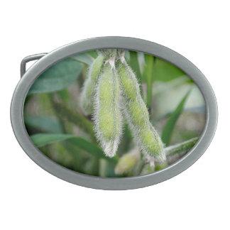 Sojabohne-Gürtelschnalle Ovale Gürtelschnallen