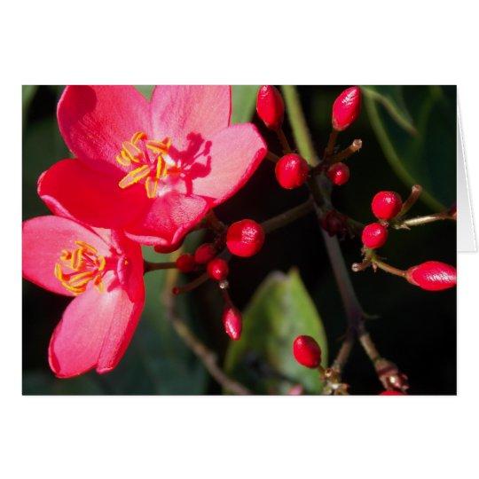 Sommer-Blüte in Figi II Mitteilungskarte