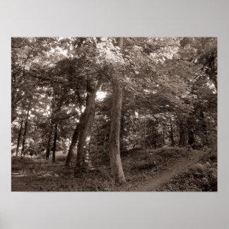 Sommer im Holz - wärmen Sie sich getont Poster