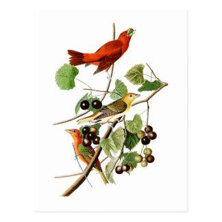 Sommer-rote Vogel-John James Audubon-Vögel Amerika Postkarte