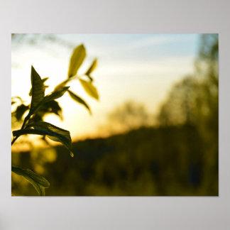 Sommersonnenuntergang Poster