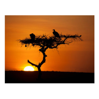 Sonnenaufgang am Masai Mara, Kenia Postkarte