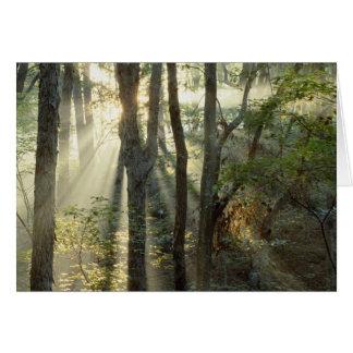 Sonnenaufgang durch Eichen- und Hickorywald, Karte