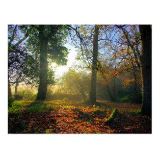 Sonnenaufgang in der Herbstwaldpostkarte Postkarte