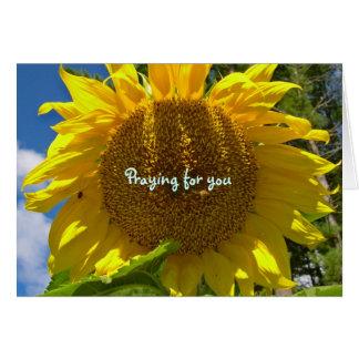 Sonnenblume-Beten Karte