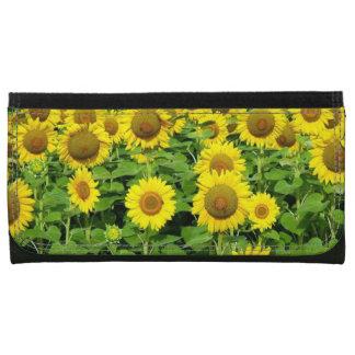 Sonnenblume-Felder