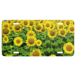 Sonnenblume-Felder US Nummernschild