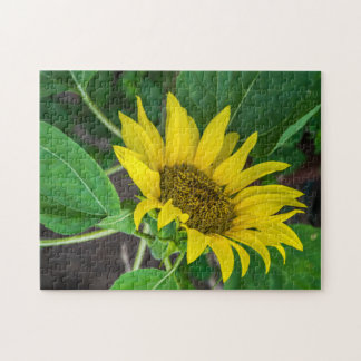 Sonnenblume-Fotopuzzlespiel
