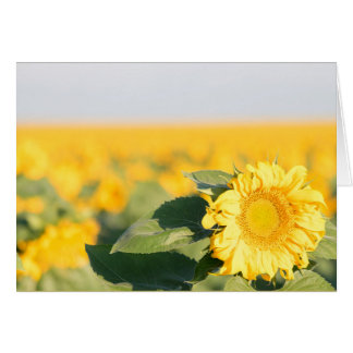 Sonnenblume Karte