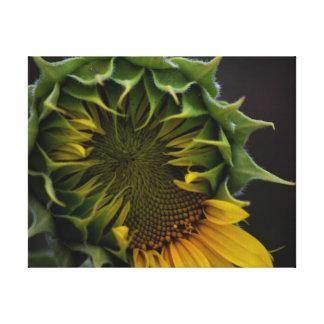 Sonnenblume-Leinwand-Druck Leinwanddruck