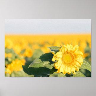 Sonnenblume-Plakat Poster