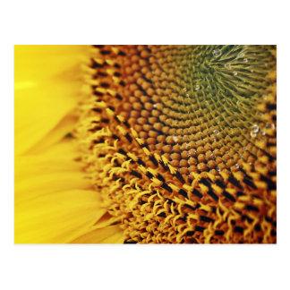 Sonnenblume - Postkarte