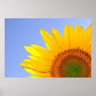Sonnenblume-Sommer-Natur Poster