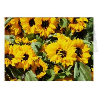 Sonnenblumen im Dutzend Karte