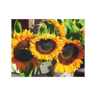 Sonnenblumen im Sonnenschein Leinwanddruck