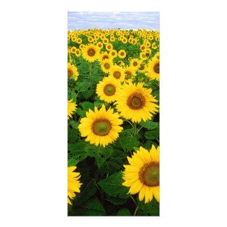 Sonnenblumen Werbekarte