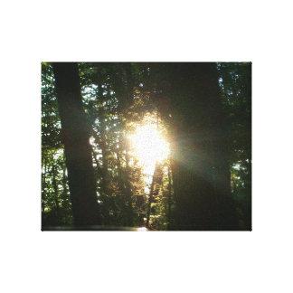 Sonnenlicht durch die Bäume Leinwanddruck