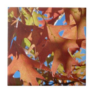 Sonnenlicht durch Herbst-Blätter Keramikfliese