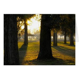 Sonnenlicht in den Bäumen Karte